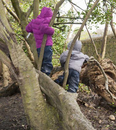 2 children climbing a tree